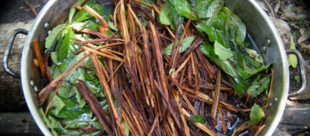 Ayahuasca Retreat | The Medicinal Properties of Shamanistic Ceremonies - shamelessprotocol.com
