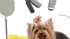 Misconceptions about dog groomers