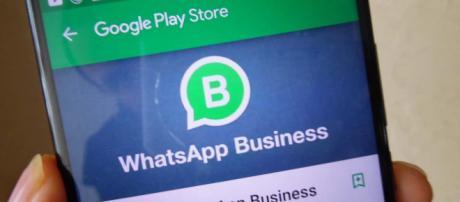 Finalmente WhatsApp Business sul Play Store