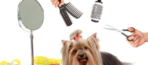Misconceptions about dog groomers – [Image via FavDog/YouTube screenshot]