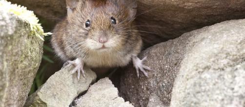El tamaño de la pupila en ratones dormidos varía rítmicamente