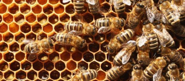 Dos niños matan miles y miles de abejas