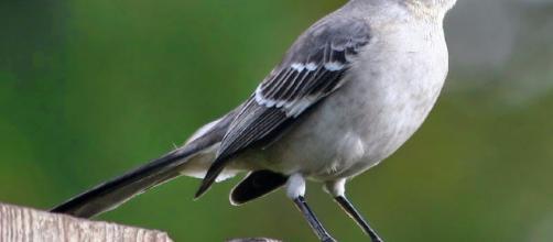 Cómo la contaminación ligera atrae a los pájaros a las áreas urbanas durante la migración de otoño