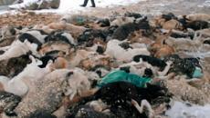 Russia: lanciata una petizione per fermare lo sterminio dei cani randagi