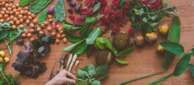 Pancs - Plantas alimentícias não convencionais | Macaé Tips - macaetips.com