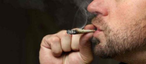 Cannabis : La France veut alléger les sanctions pour les consommateurs
