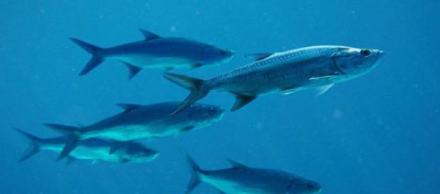 En el futuro el mar proporcionará menos peces - 20minutos.es