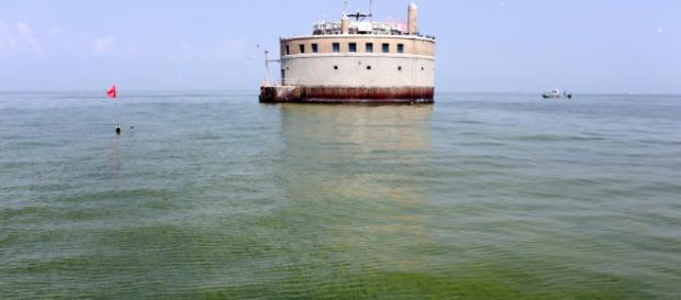 Algas Tóxicas: Grave problema de Salud. - elplaneta.org