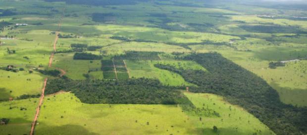 La fragmentación de la selva deja sin territorio a centenares de especies. - elpais.com