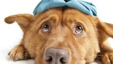 Dogs can get the flu just like humans