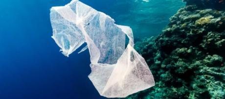 Una bolsa de plástico desechada flota en el océano junto a un arrecife de coral tropical.
