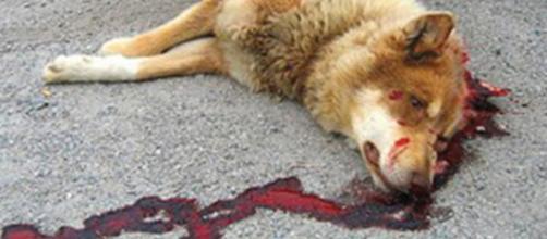 La mort de son animal de compagnie que faire ??? | Mignons de ... - mignonsdecompagnie.com