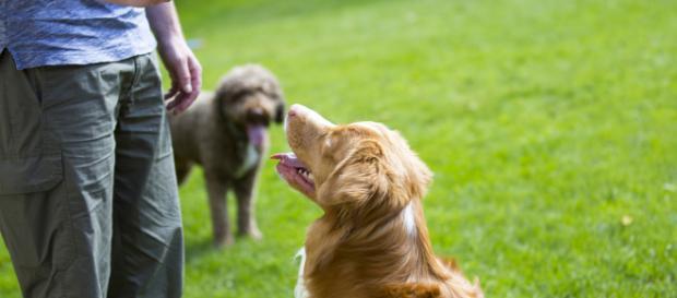 Adestramento de cães: veja como educar seu cachorro (foto: fortissima.com)