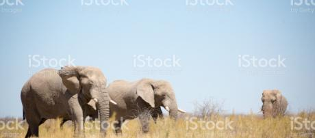 Vida Silvestre en Etosha Namibia África. - istockphoto.com