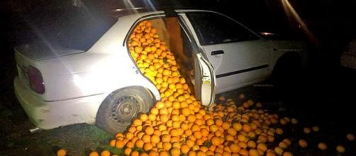 Police in Spain caught 5 suspects with 4 tons of stolen oranges [Image courtesy Policia Local de Sevilla]