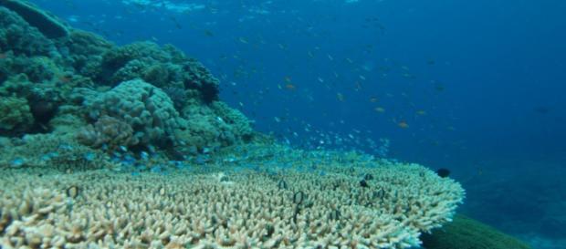 6 caminos para rescatar los arrecifes coralinos del cambio ... - ojoalclima.com
