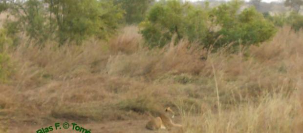 El Parque Nacional Pendjari, uno de los últimos santuarios de la vida silvestre salvaje en el oeste de África