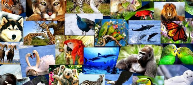 Los planes de la ciencia para salvar especies en peligro - elespanol.com
