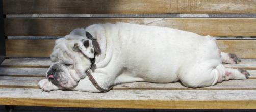 Los malos hábitos de las personas se reflejan en sus mascotas: UNAM - animalpolitico.com