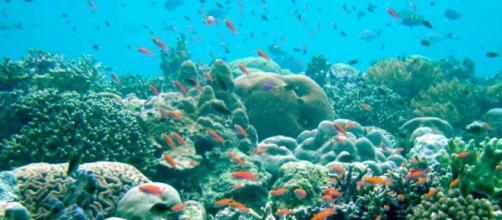 Los barcos naufragados amenazan el ecosistema de los arrecifes de ... - rtve.es