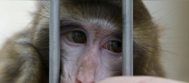 Abgas-Skandal: VW entschuldigt sich für Affen-Versuche - Blick - blick.ch