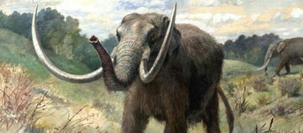 Mastodonte Americano | Amigos de los Dinosaurios y la Paleontología - mundoprehistorico.com