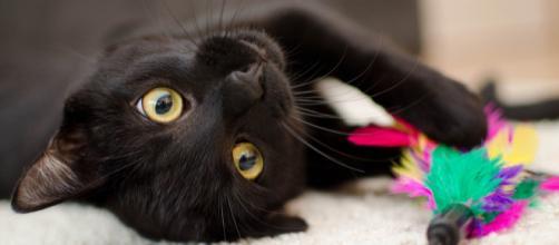 Keep you cat distracted. - [Image courtesy of Daga_Roszkowska on Pixabay]