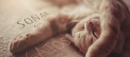 ¿Qué significa soñar con gatos? ¿Es sinónimo de buena o mala suerte?