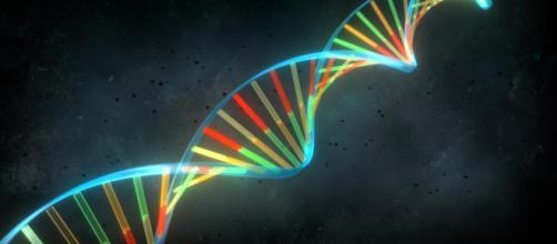 Estructura del ADN: el modelo de Watson y Crick - Biología - infobiologia.net