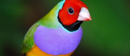 Tipos de Pájaros y Aves exóticos y tropicales - animalesmascotas.com