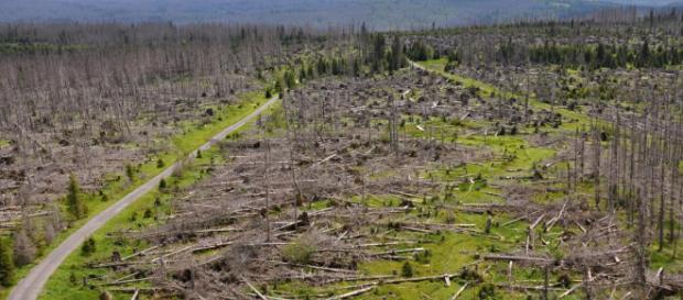 Foreste europee dimezzate dal disboscamento