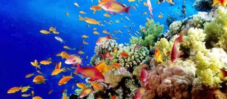 El Universo Bajo el Microscopio: Viaje a los arrecifes de coral - blogspot.com