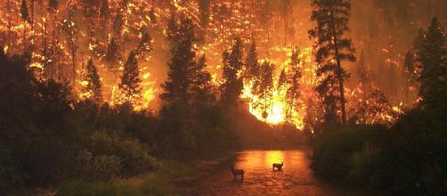 Incendio forestal - Wikipedia, la enciclopedia libre - wikipedia.org