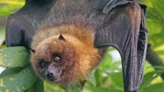 Australia's heat wave is so extreme it's frying bats' brains