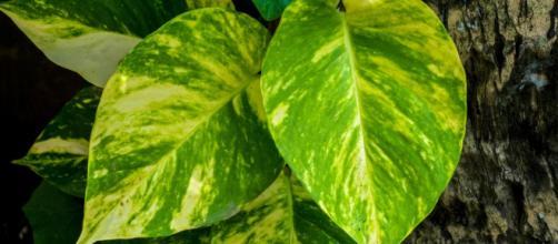 4 Plantas de Interior que Necesitan Poca Luz | Fundació Ilersis - ilersis.org
