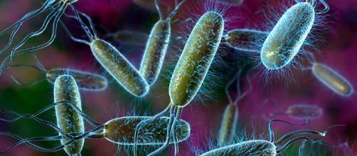 Bacteria Notes - ThingLink - thinglink.com