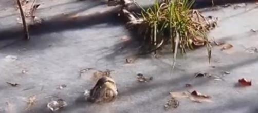Even though the lakes are frozen, the alligators are still there. - [watch game / YouTube screencap]