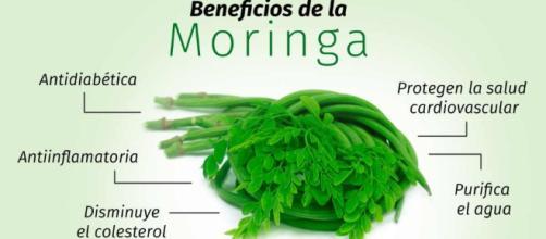 La Moringa, una planta abandonada que aporta impresionantes beneficios