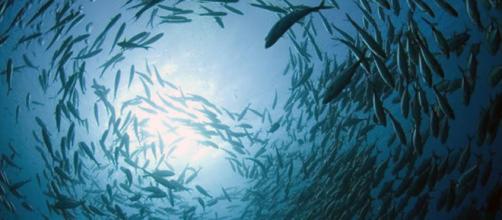 Predice estudio colapso de la cadena alimentaria en el océano ... - diario.mx