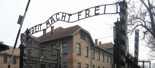 Auschwitz Museum Installs Showers in Offensive Attempt to Cool Off ... - observer.com