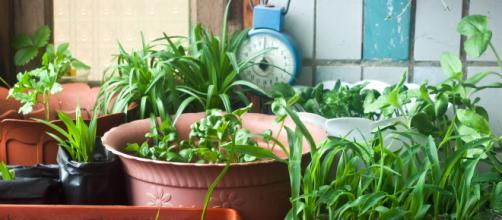 Com o cultivo caseiro você garante hortaliças completamente livres de agrotóxicos.