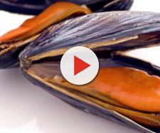 Cozze pericolose per presenza di salmonella: l'allerta del Rasff ai consumatori