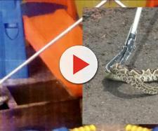 Registro presente no relatório do TCE mostra cobra foi encontrada entre os brinquedos de uma creche fiscalizada — Foto: TCE/Divulgação