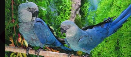 5 especies de aves extintas o por desaparecer