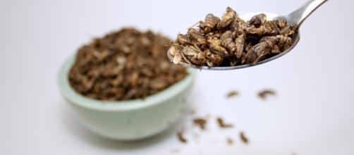 14 insectos comestibles que se disfrutan en el mundo. ¿Te ... - telemundo.com