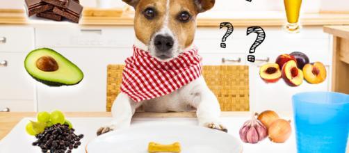 Alguns alimentos podem intoxicar os cachorros.