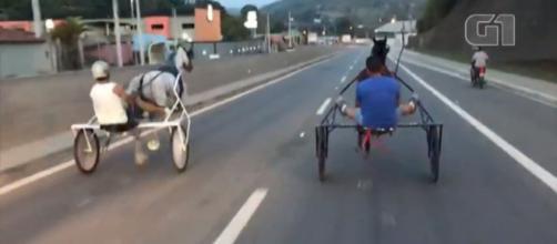 Cavalo de cor escura caiu no meio da pista e quase foi atropelado. (foto reprodução).