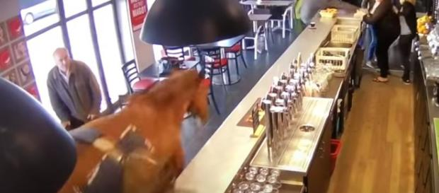 Chantilly France - gorse runs into sport betting bar, causes chaos. - Image credit - jasmin stephane   YouTube