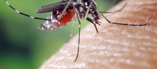 Zanzare: ora possono portare un nuovo batterio