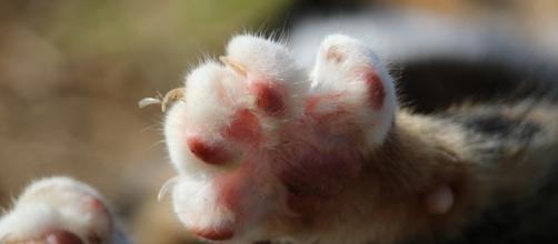 Una donna di 88 anni è morta dissanguata a seguito delle ferite povocate dai graffi di un gatto.